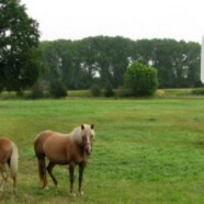 Golfbaan Zaarderheiken bij Venlo stap naderbij
